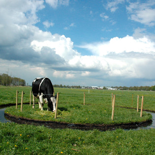 Koe, custom circular ditch, water, electric fence, and live cow H 6' x Diameter 27'