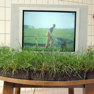 Koe (installation view in Kaashal), Sod, table, television and looping video H 4' x L 3' x D 3'