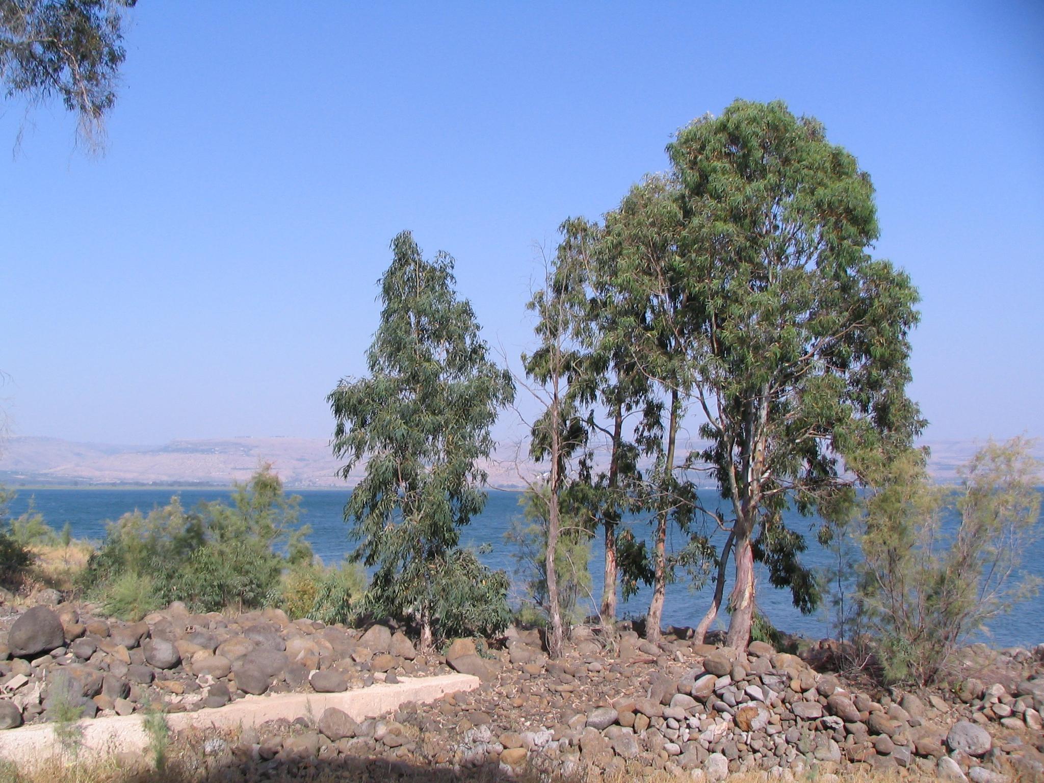 На берегах Кинерета