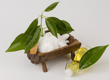 Camphor Essential oil for health, healing and cleaning