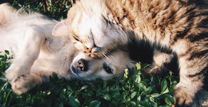 Caring for Pets After You Die