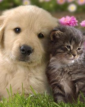 puppy-kitty.jpg