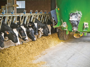 Balancing large farms and toll on environment