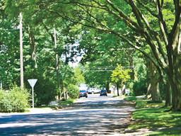 Urban forestry: adding to the sense of place