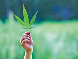 November ballot question on legalizing marijuana