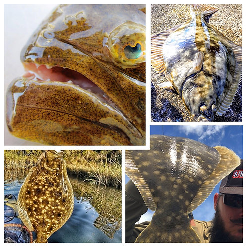 2020 Flounder November 14th