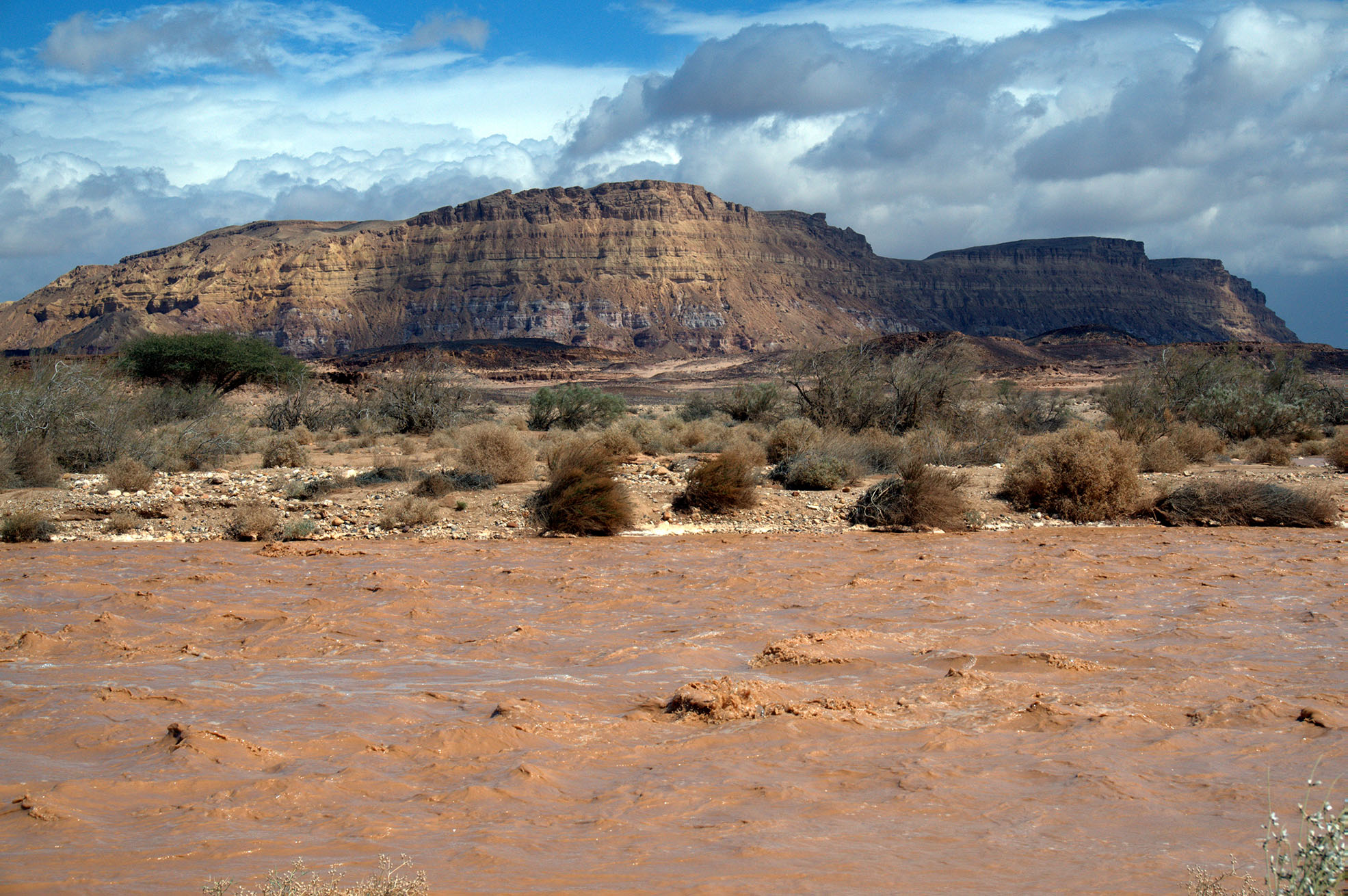 שיטפונות במדבר
