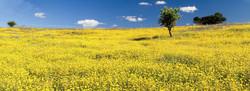 campo margheritoni
