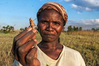 Locusts & Men