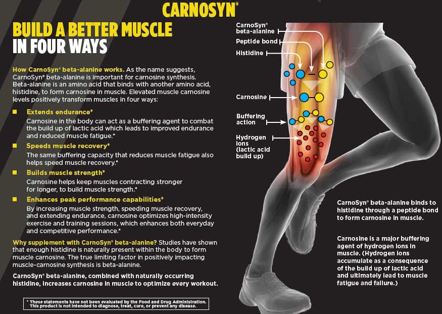 CarnoSyn Beta Alanine and Lactic Acid Studies