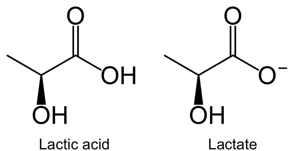 Lactic Acid vs Lactate