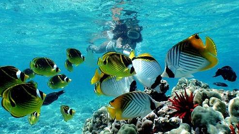 snorkeling-with-fish.jpg