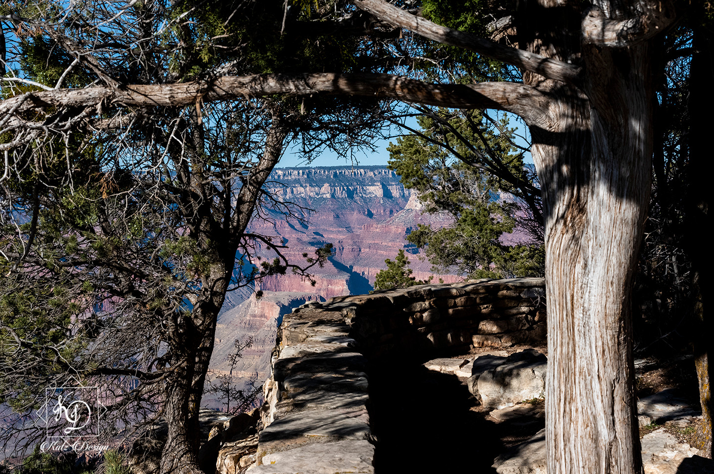 The Grand Canyon Beyond the Trees