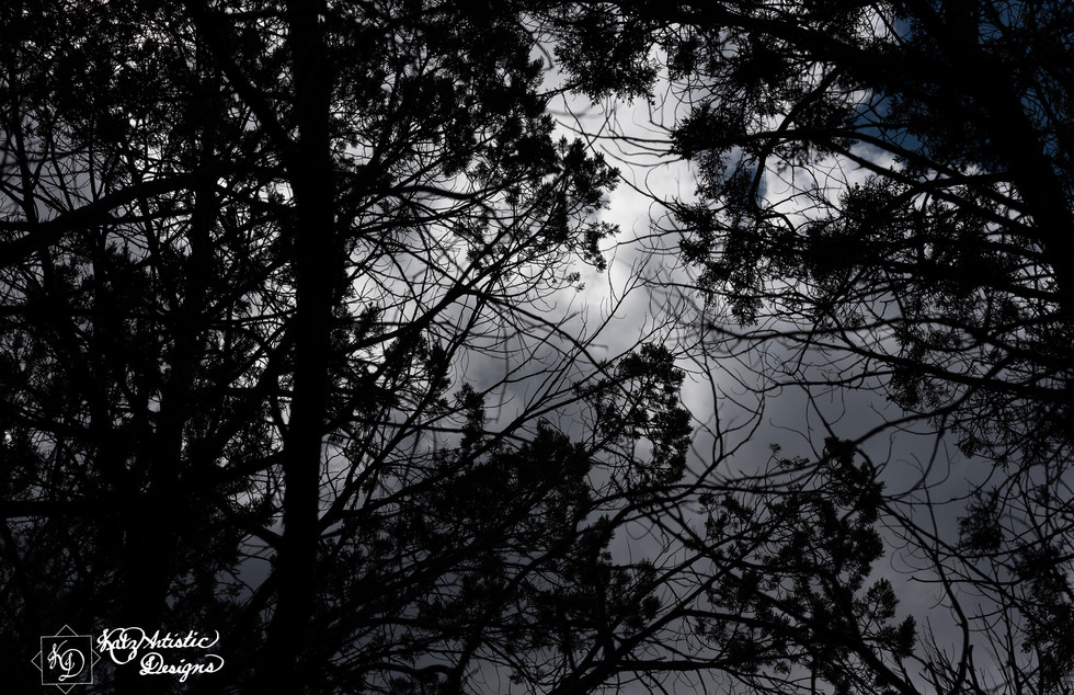 Trees and the Sky