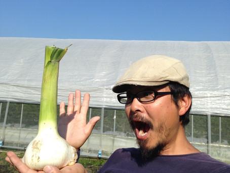 イチゴ終了!夏野菜スタート!