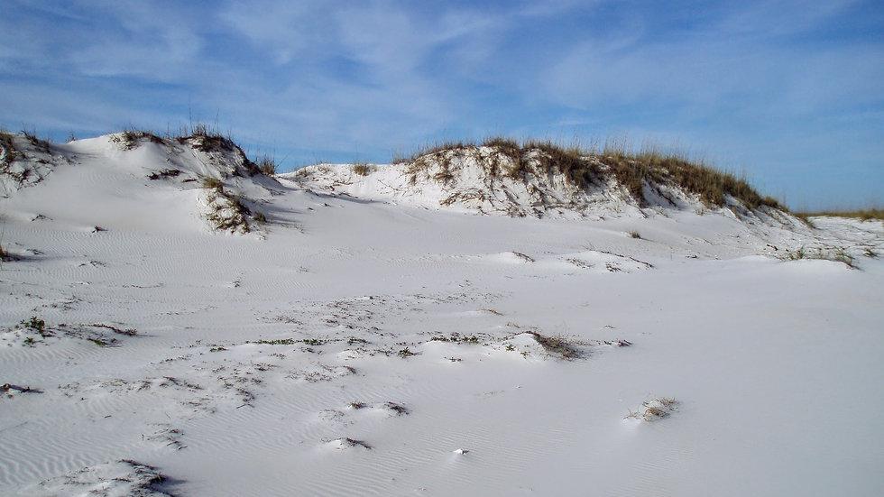 St. George Island Dunes