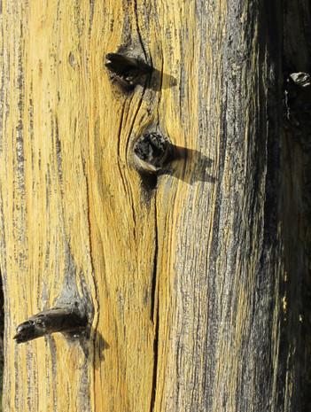 Yellowstone_2011_1.JPG