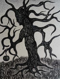 Old Apple Tree, ink on paper, 2019