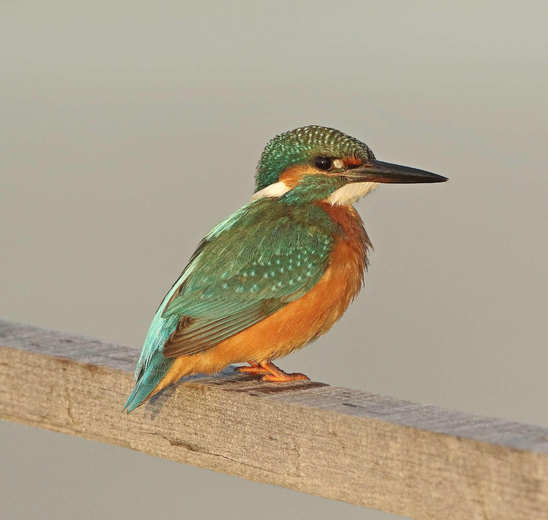 Kingfisher_Antonis_Tsaknakis_Portes_Magazine