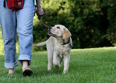 dog walking nicely on lead.jpg