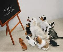Puppy class with a difference