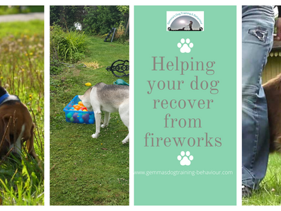 Helping your dog recover from fireworks