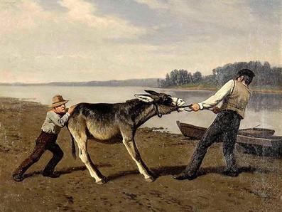Stubborn as a mule?