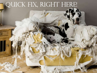 The quick fix answer to all your dogs behaviour problems has just arrived!