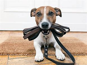 dog holding lead.png