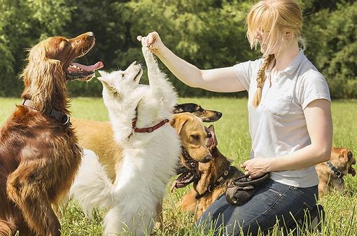 positive-reinforcement-dog-training.jpg