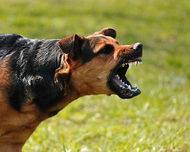 reactive-dog.jpg