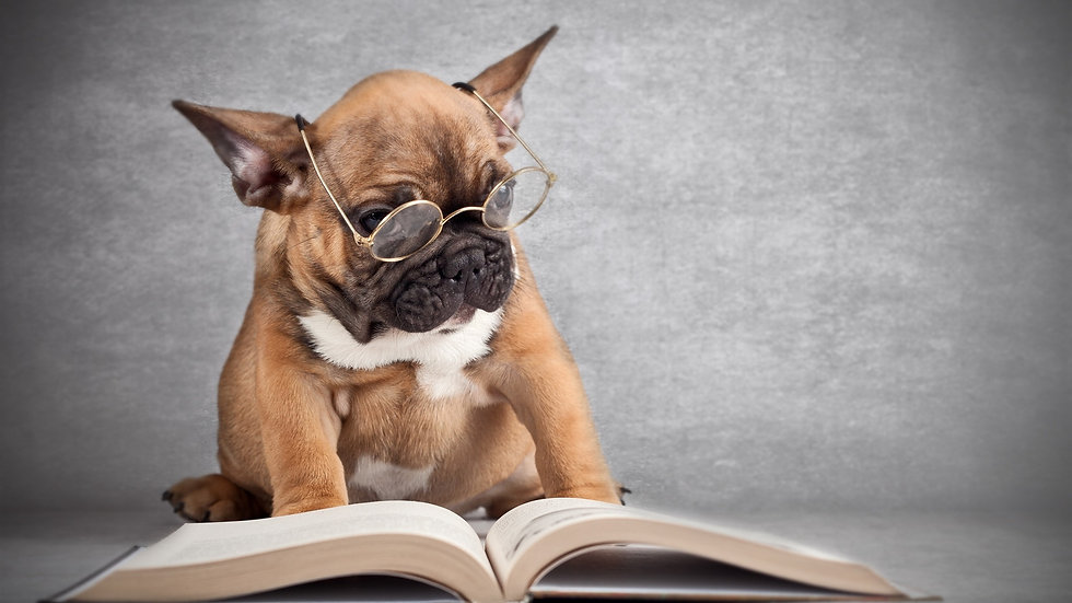 Dog-wearing-glasses-reading-a-book_1920x