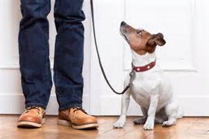 dog and master.jpg