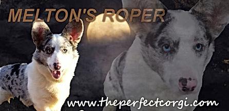 Roper Banner.jpg