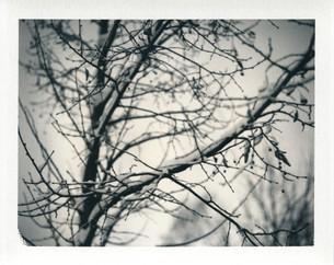 Under the linden tree