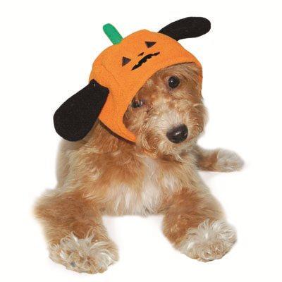 DOGO Pumpkin Hat