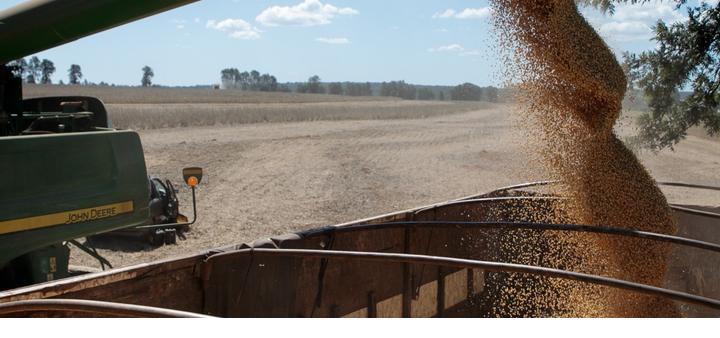 Gigantes alimentarios buscan la prohibición de la soya de la región deforestada de Brasil