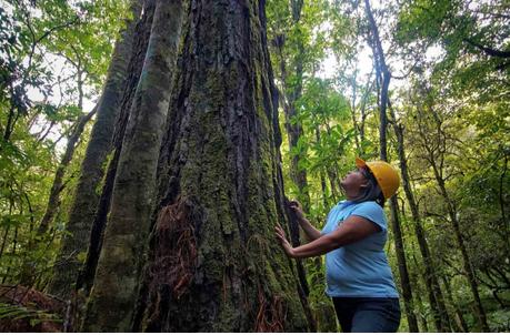 Capulálpam, una comunidad forestal modelo y su lucha contra la minería