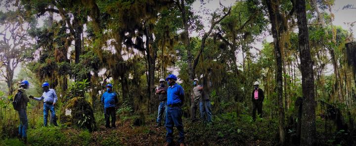 México: comunidad zapoteca conserva un bosque y frena la migración