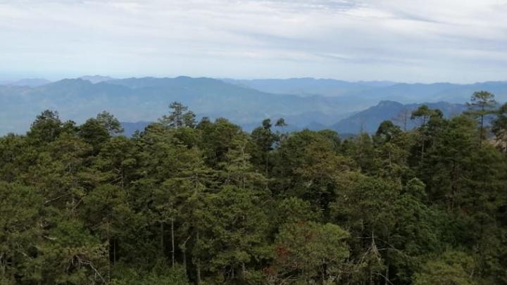 """Arturo García: """"Los bosques pueden ser un factor de desarrollo en México"""""""