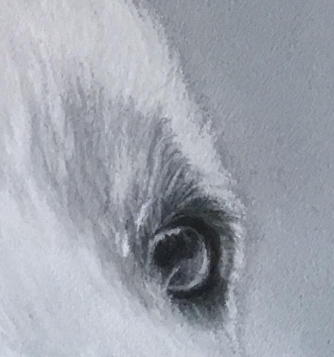 détails des yeux Meije