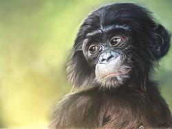 Bébé Bonobo