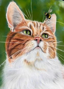 Le chat et le hanneton