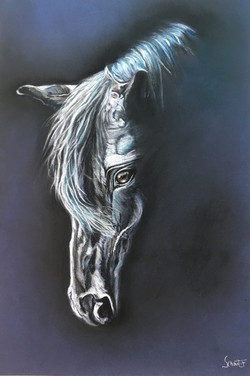 cheval                 100 €