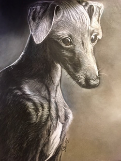 Lady whippet       50 €