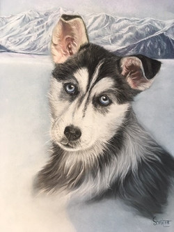 bébé Husky                100 €