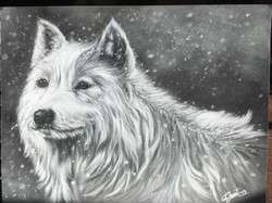 Loup blanc