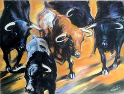 les taureaux en Arles.