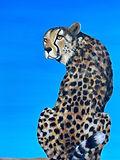 cheetah animal painting animal print amy