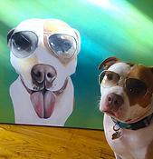 custom pet portrait Pit Bull sunglasses